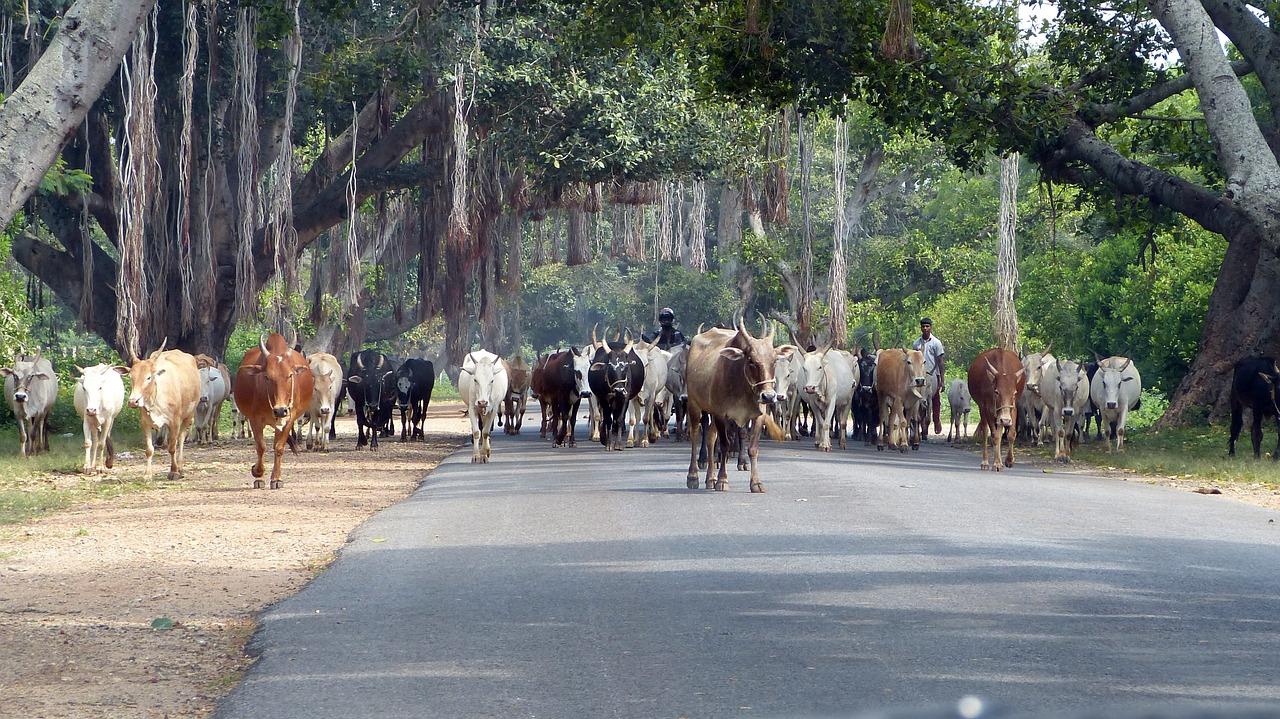 Transport af dyr
